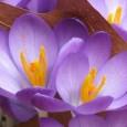 BUCHARD VOYAGES vous propose : Crocus en fleurs et printemps au Tyrol Balades découvertes printanières et visites originales Jour 1 : Suisse – Imst Départ des grandes localités de Suisse […]